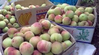 平谷大桃有哪些功效,如何健康食用平谷大桃