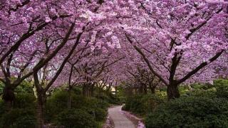 四月去看平谷桃花节