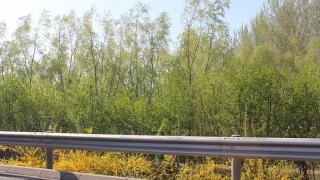 14年4月13日 平谷赏桃花一日游